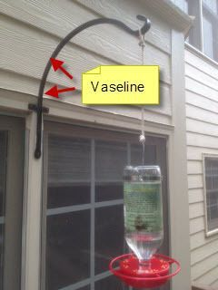 RE: Vaseline To Keep Ants Out of Hummingbird Feeders.it works! My grandmother did this ALLLLL the time!