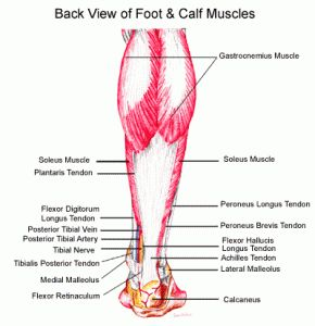 Barefoot Running Shoes Calf Pain
