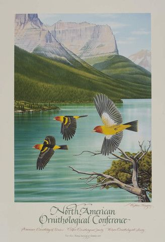 This poster of flying western tanagers in Glacier National Park was created for the North American Ornithological Conference in conjunction with American Ornithologists Union, Cooper Ornithological So
