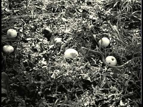 Alumbramiento (Victor Erice, 2002) Unha obra magnífica.