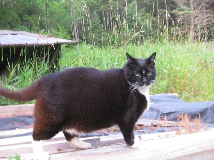 My neighbor's cat, 'Oh Gee'.  I asked him once if he'd tried putting out the food once or twice a day.  I can't, he said sheepishly, if his dish is empty, he bites me.  The cat is healthy, at 10, he still climbs trees, catches chipmunks--of which there are many, as squirrels, and sometimes skunks and raccoons come in the cat door to feast on the never ending kibble.