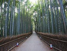Arashiyama - outskirts of Kyoto - Bamboo forest!!! (also nearby: monkey park, scenic rail, temples)