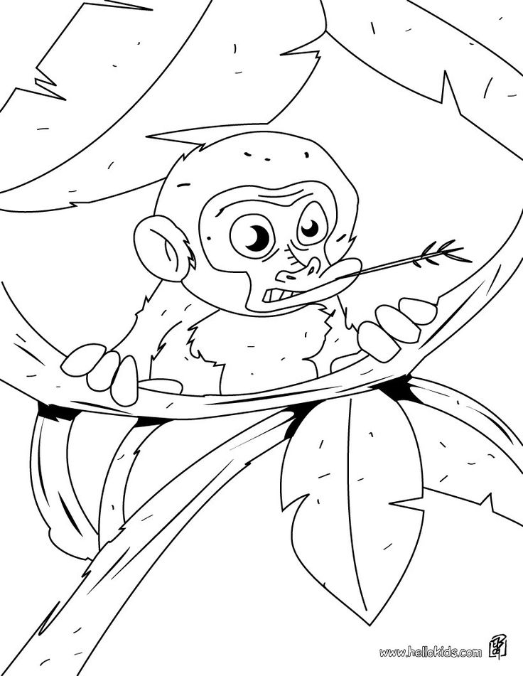 baby monkey coloring page more jungle animals coloring sheets on hellokidscom - Wild Animal Coloring Pages