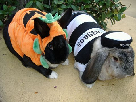 Happy halloween these bunnys are in holiday spirit yah