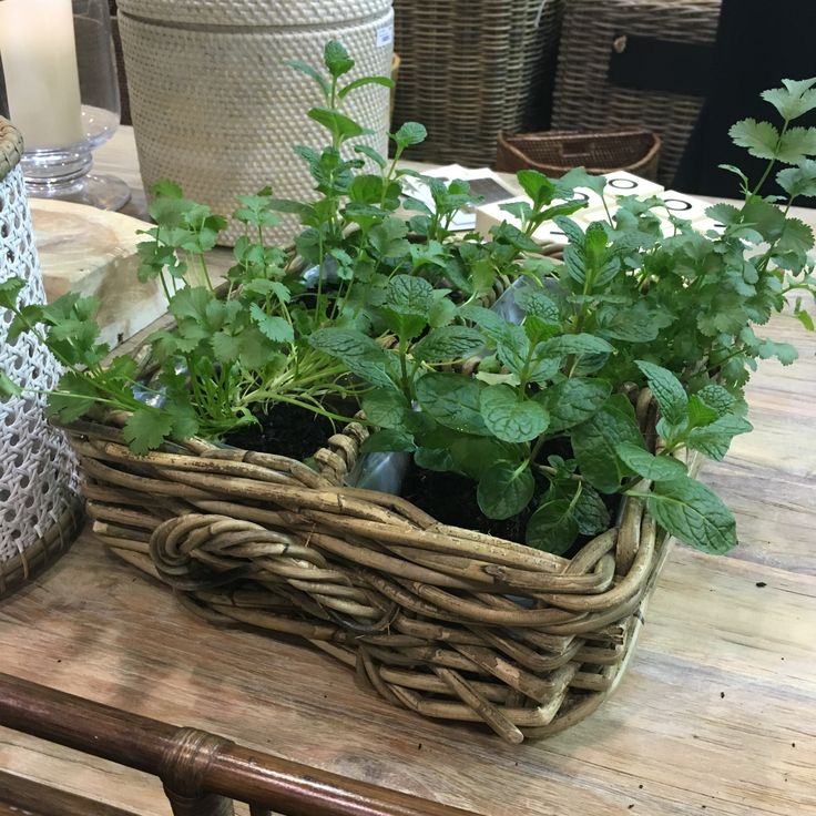 Have you always wanted an indoor herb garden but never had the space? Then our new Herb Baskets are the answer...herbs have never looked more stylish! www.rgimports.com.au