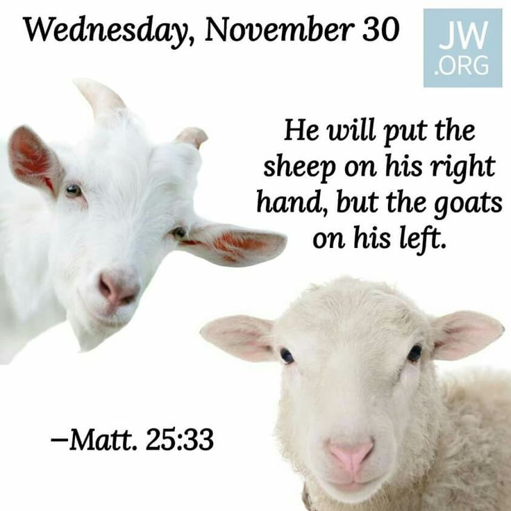 He will put the sheep on his right hand, but the goats on his left. Matthew 25:33.