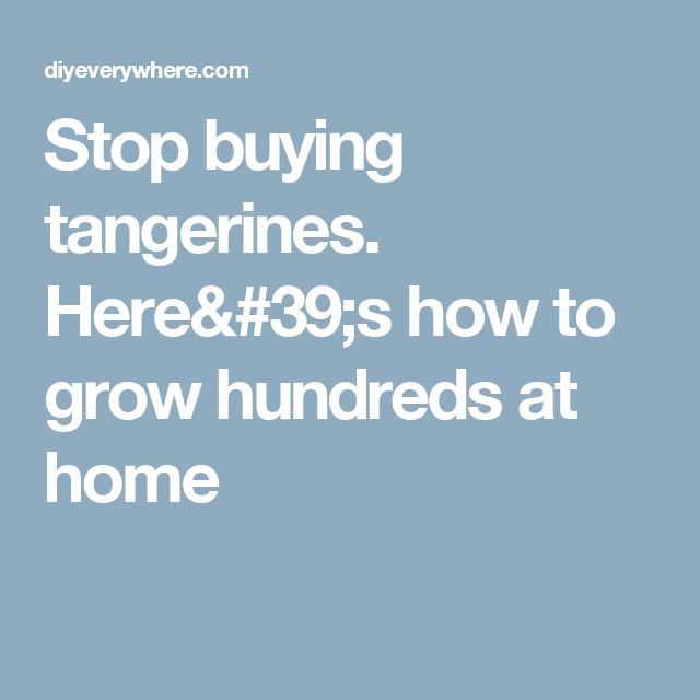 Stop buying tangerines. Here's how to grow hundreds at home