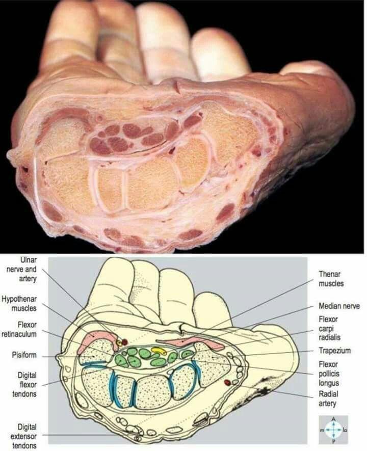 38 best Medicine and Surgery images on Pinterest | Medical, Medicine ...