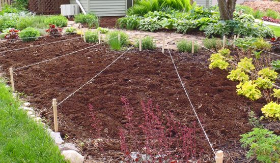 19 Best Images About Front Lawn Veggie Gardens On