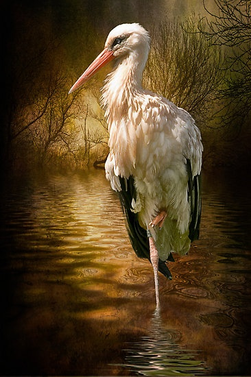 Stunning photograph of a European Stork! So very beautiful! <pin by ximena arancibia on ciguenas>: