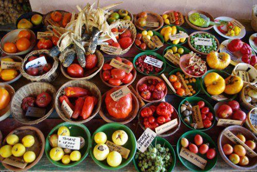 PAR SOPHIE CHAPELLE 23 DÉCEMBRE 2014 Monsanto, le géant américain des semences, visait l'obtention d'un brevet portant sur des tomates issues de sélection traditionnelle et naturellement résistantes à un champignon appelé Botrytis cinerea. Mais c'était...