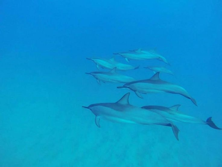 Bucket list adventures in Mauritius - swimming with dolphins! #Blue #Dolphins #Mauritius