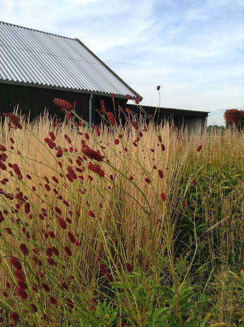 Mercurelli's Garden Design: Wordless Wednesdays: Hummelo, Piet&Anja Oudolf's Private Garden. An Antipasti!