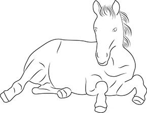 ausmalbild pony im zoo in 2020 | ausmalbilder pony