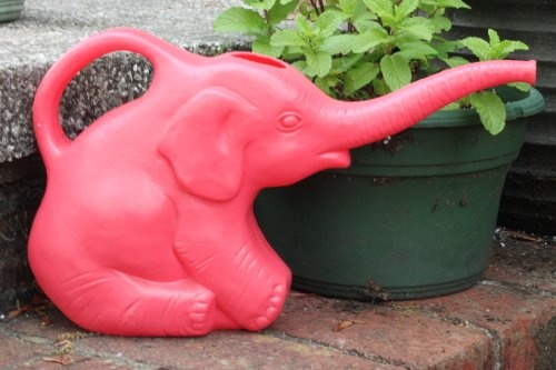 17 Best Images About Virtual Watering Can Collection On