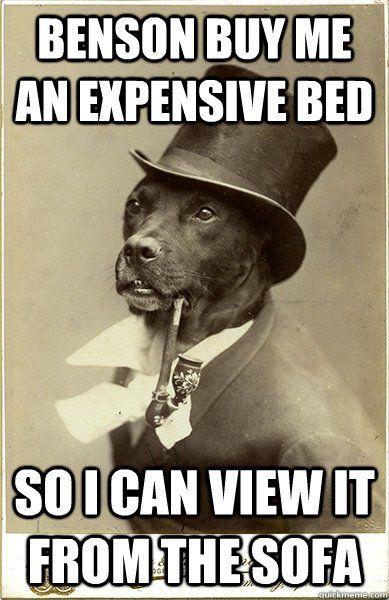 Old Money Dog Meme