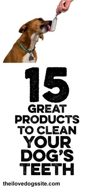 15 GREAT Products To Clean Your Dog's Teeth!