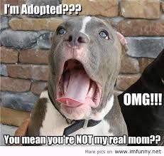 funny dog sayings sweet