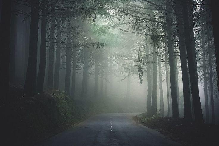 Туманный лес острова Мадейра