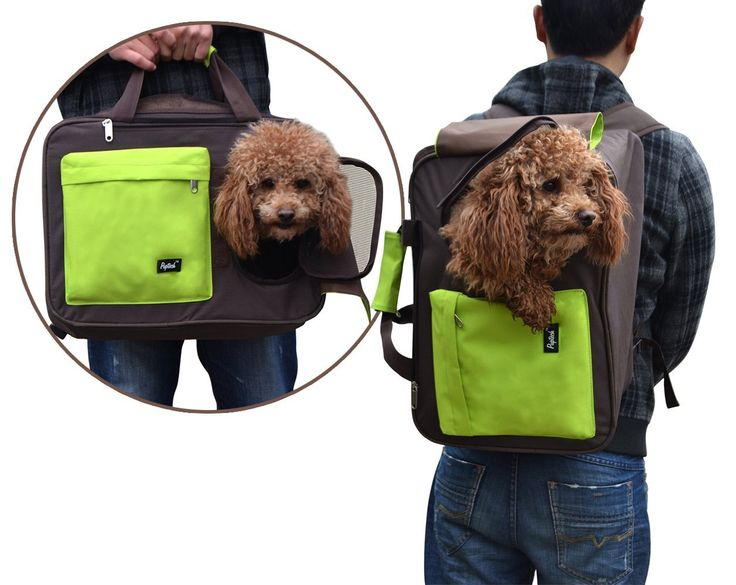 Multiple Pet Travel Carrier for Small Dogs Cats Airline Approved Puppy Backpack * Special  product just for you. See it now!(This is an affiliate link and I receive a commission for the sales) : Cat Cages, Carrier and Strollers