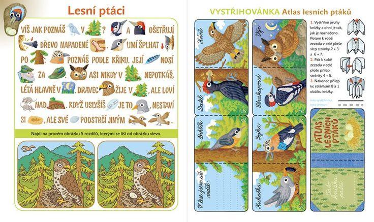 lesní ptáci