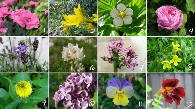 20 spiselige blomster og forslag til bruk. | Moseplassen