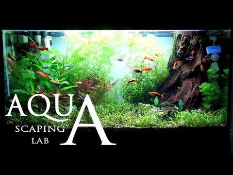ShrimpCity Timelapse Aquascaping - YouTube