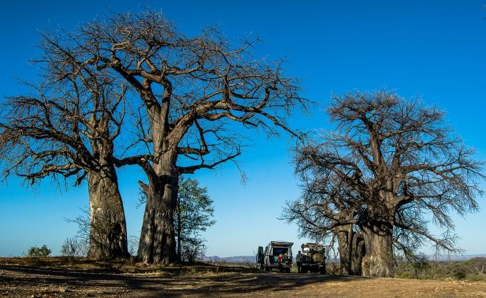 Beverly Jackman appreciating the baobabs on a recent trip to Zimbabwe