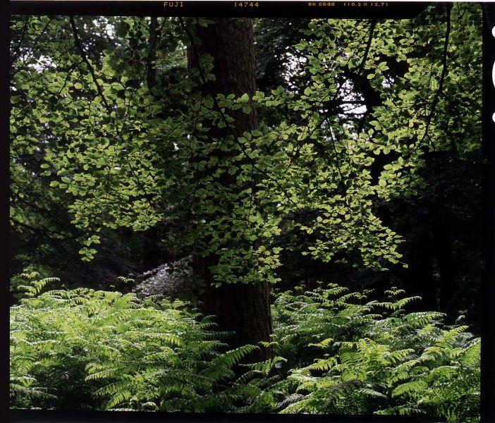 1990 Dunbar 5x4 clr 01 Treescapes 01