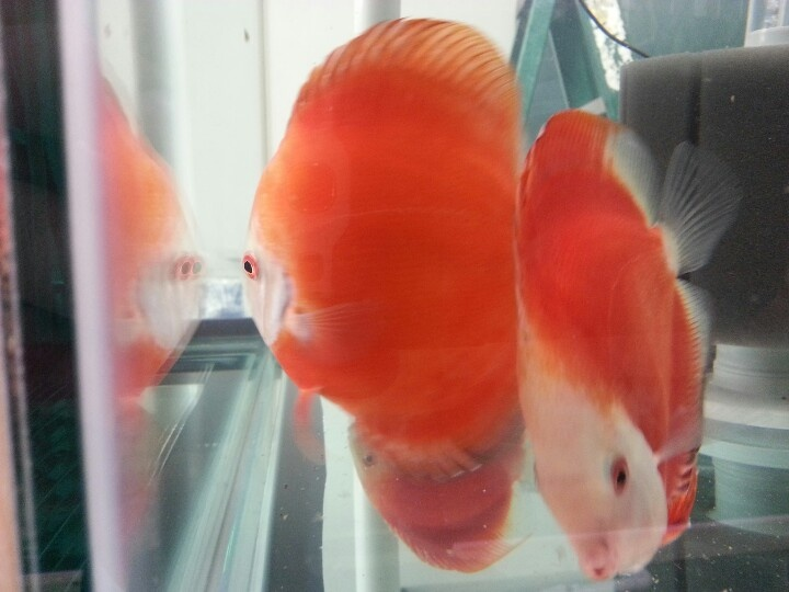17 best images about tropical fish aquariums on pinterest for Best time to fish tomorrow