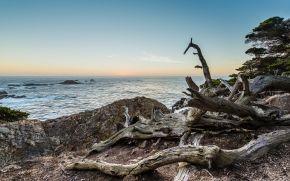 California, Big Sur, mare, puntellare, Driftwood, paesaggio