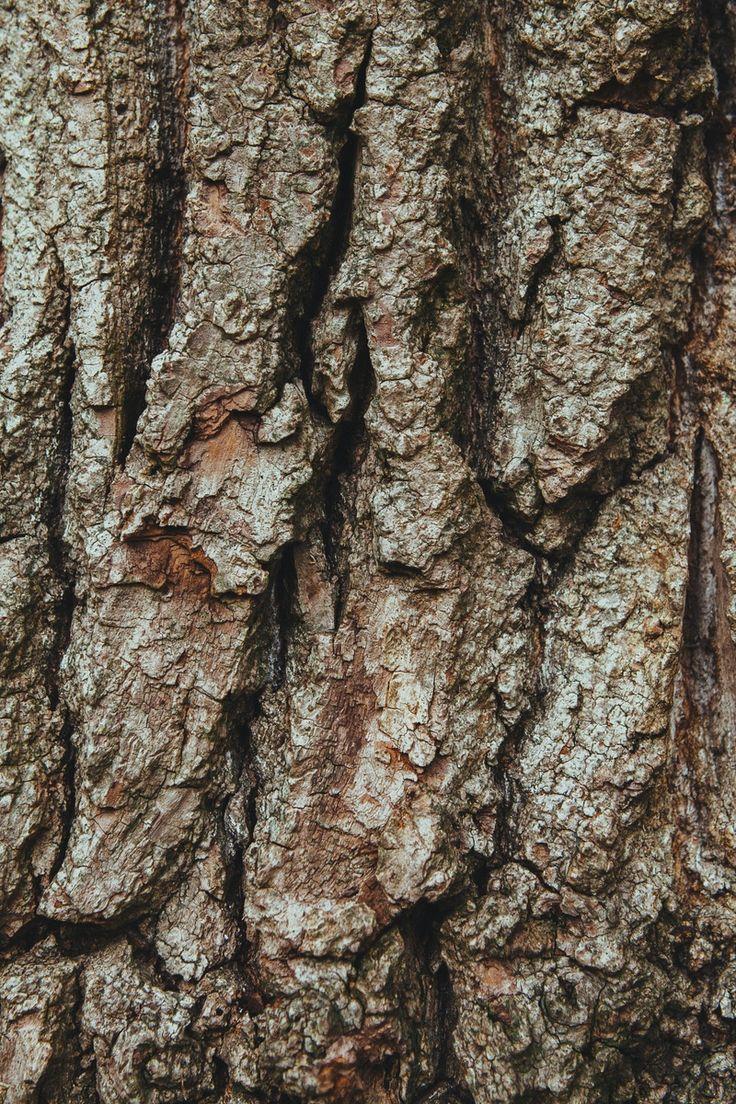 Best oak tree bark ideas on pinterest