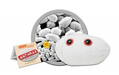 Anthrax (Bacillus anthracis)