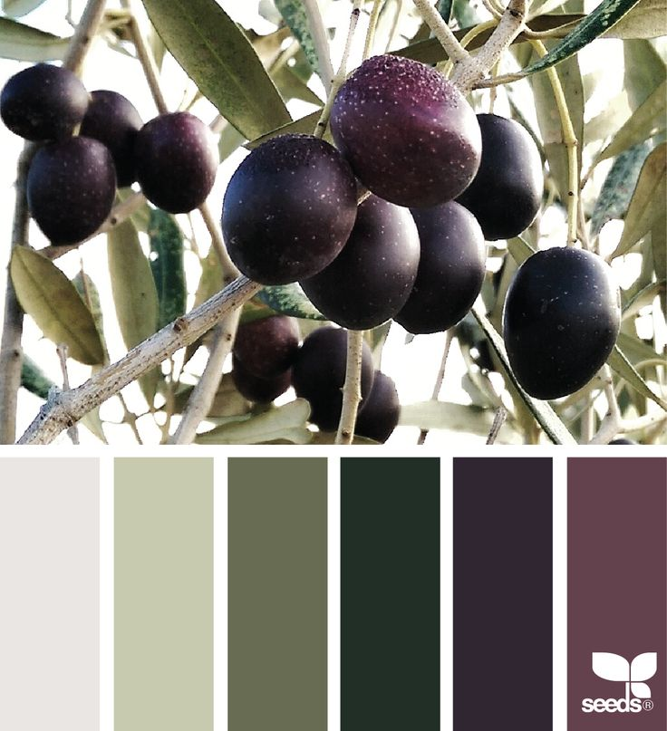 { olive color } image via: @auntieclaras