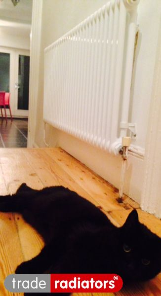"""Kath Ludlow's 2 Column 600x1000 from Trade Radiators, starring 'Slinky' the cat """"Slinky the cat warming up next to our ultra slinky slimline radiator!"""""""