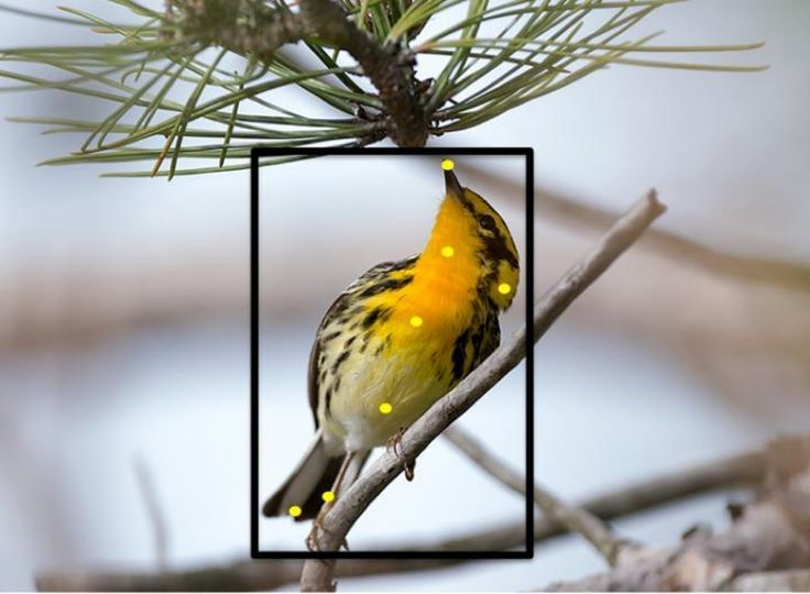 This new program identifies birds with just a photo - The Washington Post