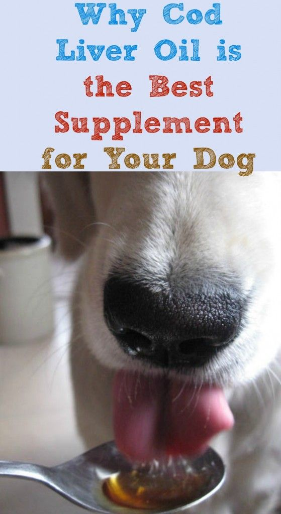 An explanation of the many benefits of cod liver oil for dogs and why it's the best supplement for your dog.