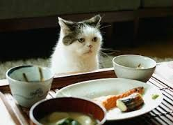 Image result for まこ 猫