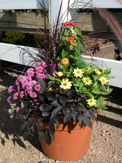 Fall container garden ideas OuTdOOrs GaRdEniNg