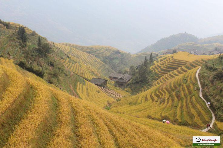 longji terraces tour, Travel Guide www.westchinago.com info@westchinago.com