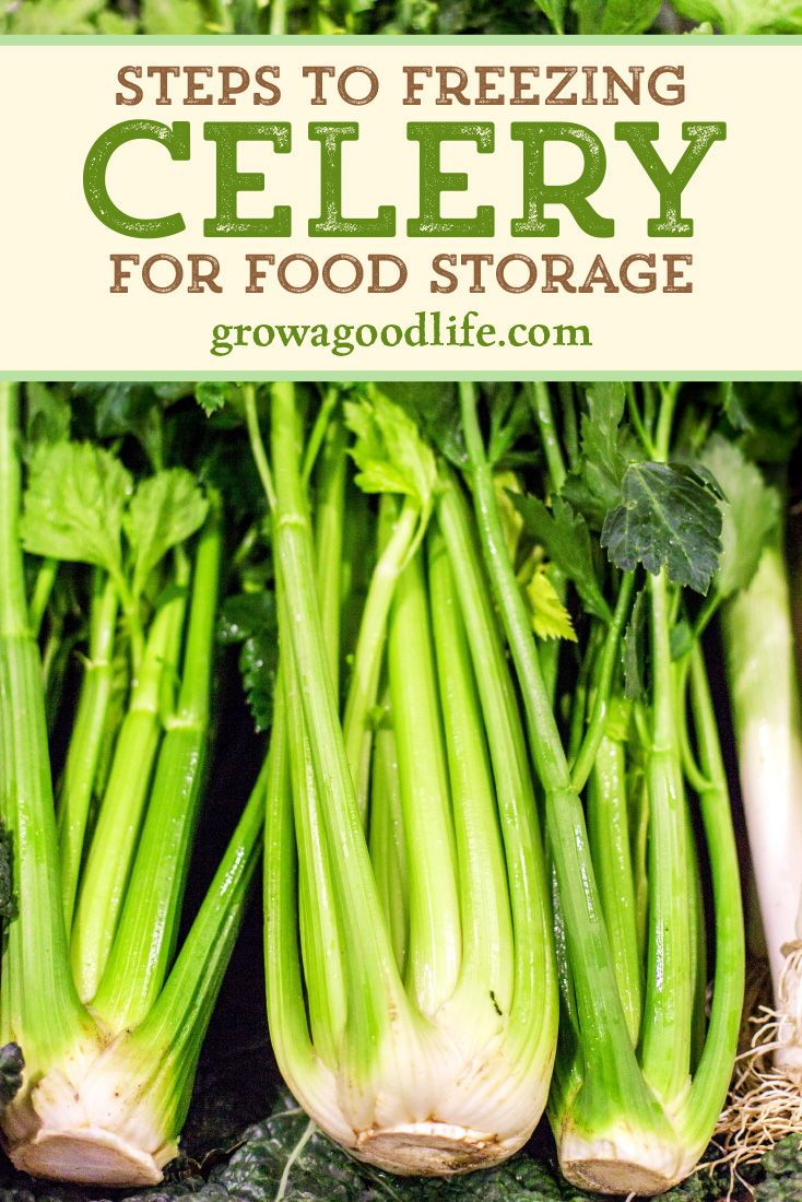 How To Freeze Celery Recipe How To Freeze Celery Freezing Vegetables Fruit And Vegetable Storage