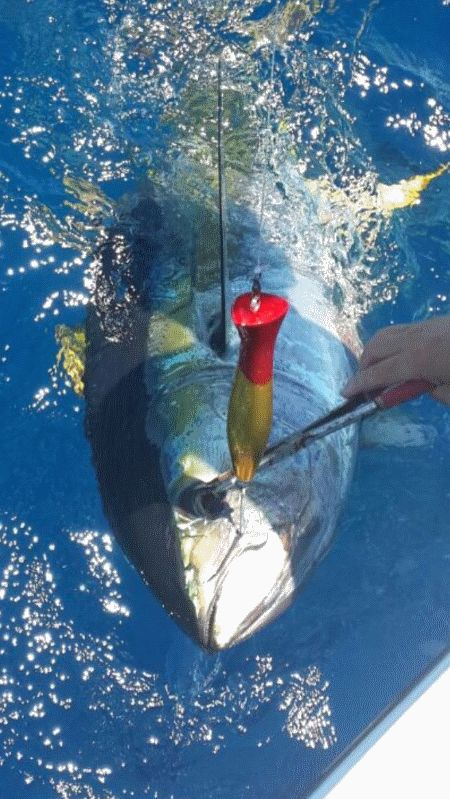 For more catch reports check us out at www.xtremecharters.co.za