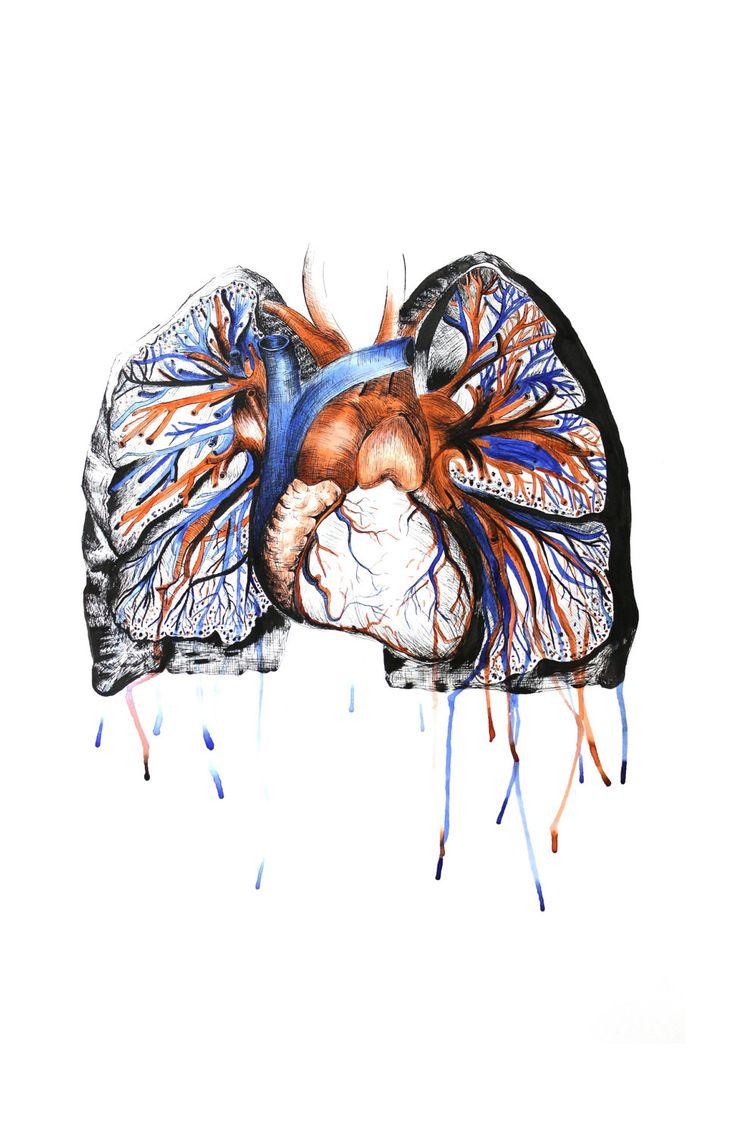 31 best anatomy art images on Pinterest | Anatomy art, Human body ...