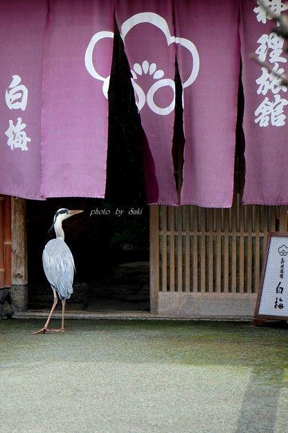 """ランチたいむ。""""Lunch Time""""... Noren and heron"""