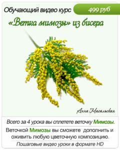 мимоза.jpg-1