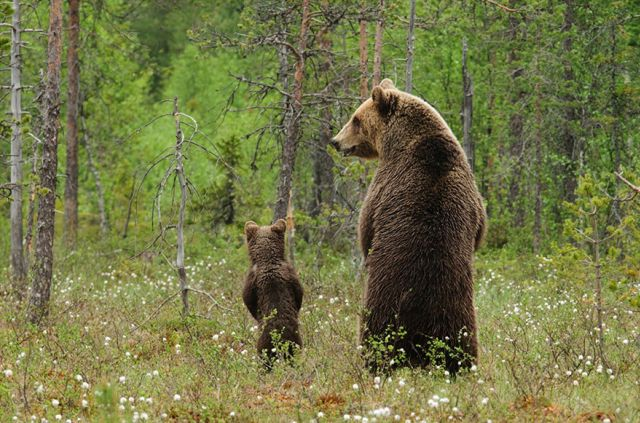 These Animals Got Parenting Right