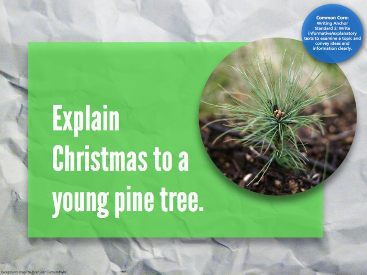 Writing prompt: explain Christmas to a young pine tree. Oh. My. Goodness. This would be too funny before break. ;D
