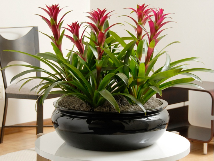 Orchid Plant Stands - Bing Images