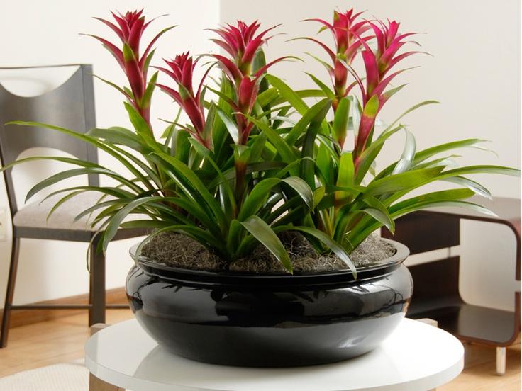 Orchid Plant Stands - Bing Images: Plants Stands, Flowers Pots, Google Search, Fiberglass Planters, Indoorflowerpot Com, Orchids Bowls, Indoorflowerpots Com, Indoor Plants,  Flowerpot