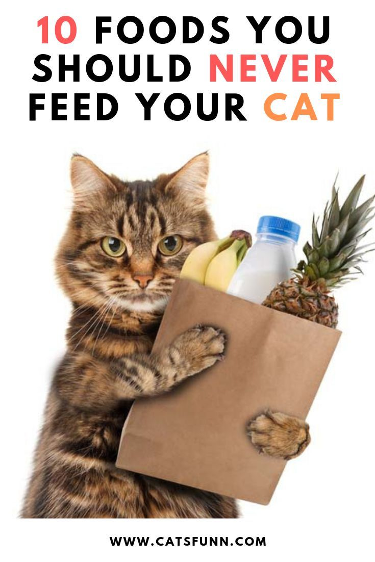 It Is Better To Take A Precaution By Keeping An Eye On Following 10 Things That You Must Avoid Feeding Your Cat Best Cat Food Funny Cats Kitten Care